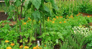 Има изследвания, които показват, че при смесени насаждения растенията взаимно се пазят