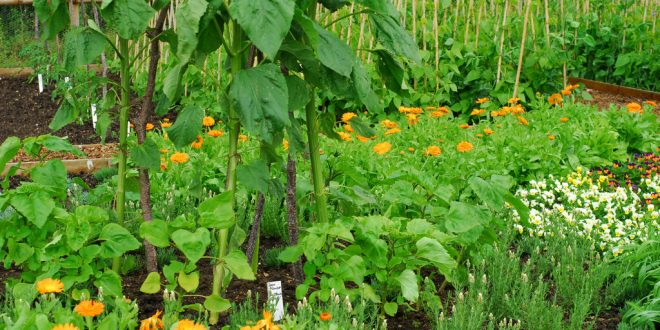 Сажаем растения в огороде 555