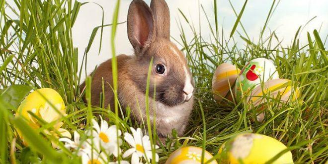 Великденския заек е едно от малкото вълшебства, в които днешните деца все още вярват.