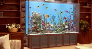 Аквариум с рибки у дома – красота и релаксация