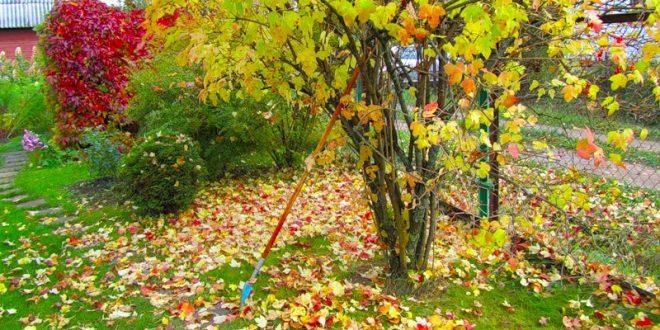 Есен на двора