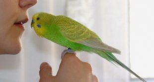 Съжителството с папагал е интересно, но и отговорно