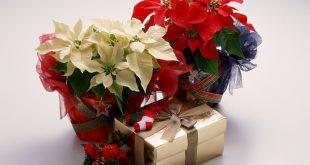 Красота и магия в Коледната звезда