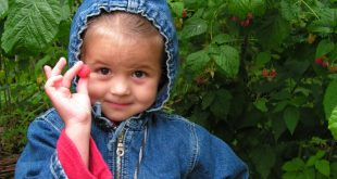 Малините – любим плод на децата