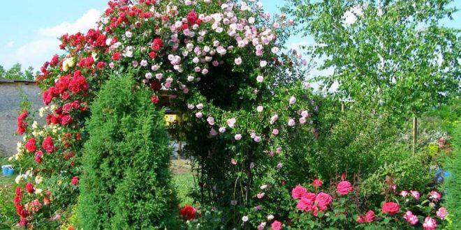 Грижите за градината трябва да започнат още през март с първите слънчеви лъчи