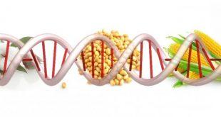 Бъдещето вероятно тепърва ще ни изненадва с нови болести, резултат от ГМО