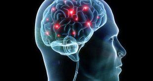Човешкият мозък продължава да бъде най-голямата загадка за човечеството