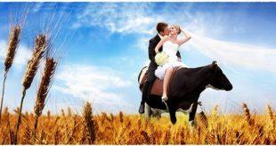 Всяка жена мечтае как нейният принц ще дойде някой ден на бял кон и ще я дари с любов и щастие