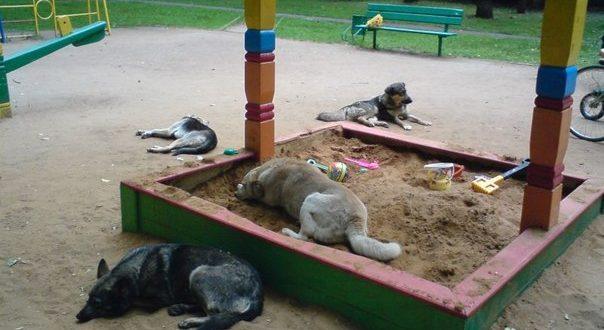 Мястото на кучетата не е по улиците на града и детските площадки