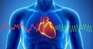 За 1 минута сърцето ни изтласква по тялото от 3 до 5,2 литра кръв