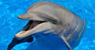 Учените са доказали,че делфините са едни от най-интелигентните същества не само във морето, но и на Земята
