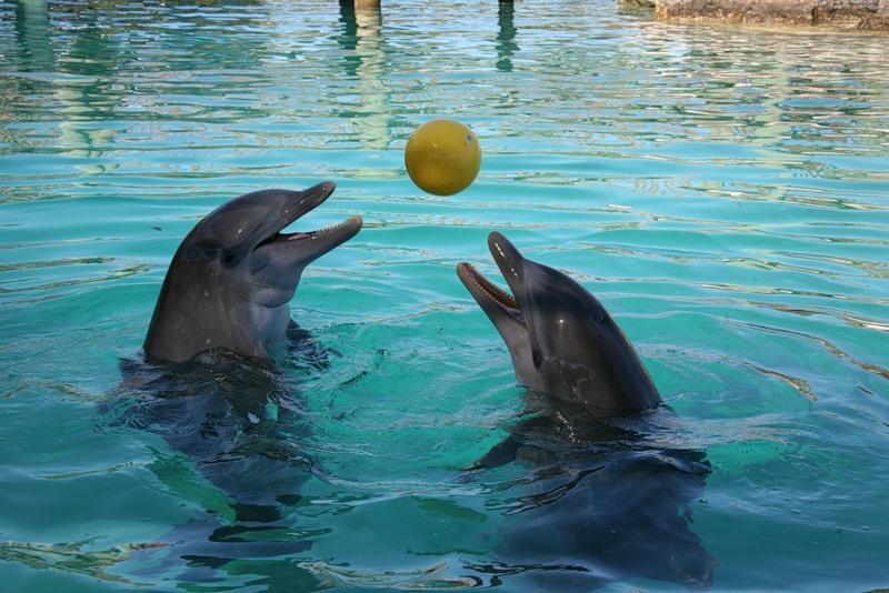 Делфините проявяват самосъзнание и дори характер, който е индивидуален
