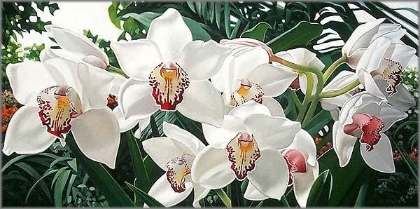 Орхидеи Cymbidium