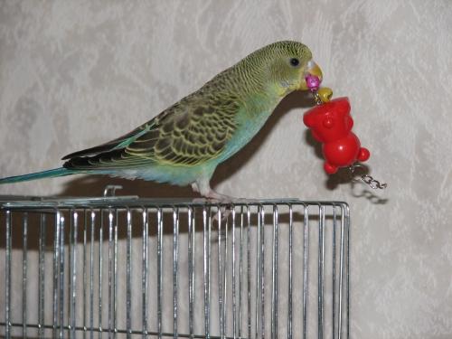 Папагал с играчка