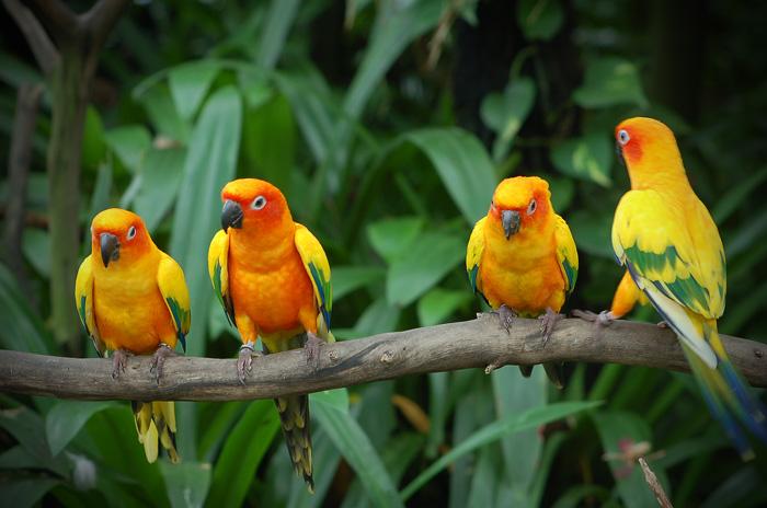 Папагал в природата
