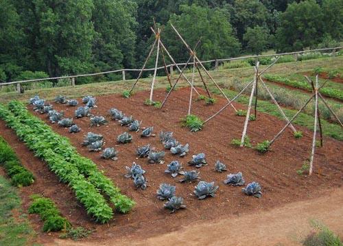 Градина със зеленчуци