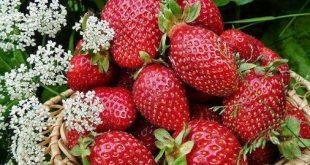 Ароматни пресни ягоди борят пролетната умора