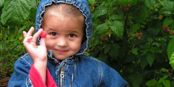 Децата обичат малини