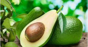 Авокадо в саксия у дома