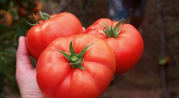 Български домат